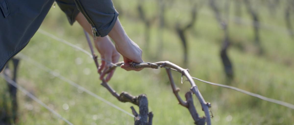 site_vin-austral_notre-histoire